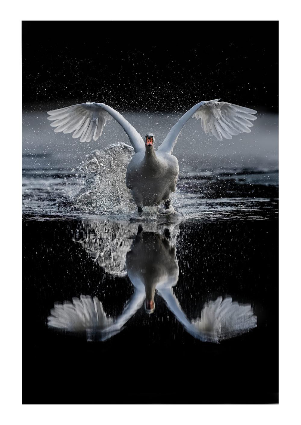 Swan Lake by Abi Warner